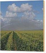 Watering The Corn Wood Print