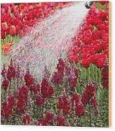 Watering The Garden Wood Print