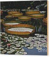 Waterlilies All Wood Print