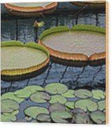 Waterlilies And Platters 2 Wood Print by Byron Varvarigos