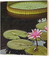 Waterlilies And Platters Vertical Romance Wood Print