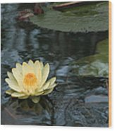 Waterlilly 1 Wood Print