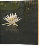 Waterlilly 5 Wood Print