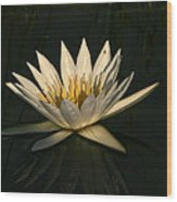Waterlilly 7 Wood Print