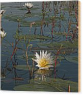 Waterlilly 8 Wood Print