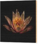 Waterlily 2 Wood Print