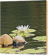 Waterlily And Coconuts Wood Print