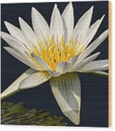 Waterlily And Pad Wood Print by Susan Candelario