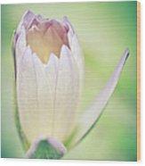 Waterlily Dreams 10 Wood Print