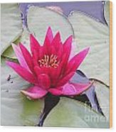 Waterlily In A Pond Wood Print