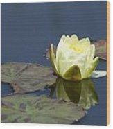 Waterlily One Wood Print