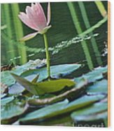 Waterlily Whimsy Wood Print