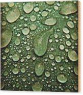 Raindrops On Watermelon Rind Wood Print