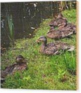 Watershed Ducks Wood Print