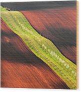 Waterslide Wood Print