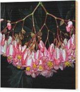 Wax Begonia Wood Print