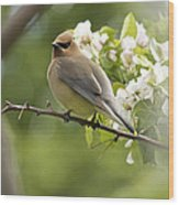 Waxwing In A Dream Wood Print