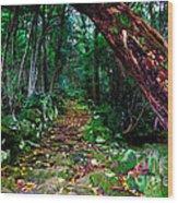 Way To The Lake Wood Print