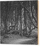 We Follow The Path Wood Print by Jon Glaser