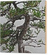 Weathered Bonsai Wood Print