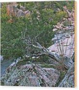 Weathered Cedar Overlooking The Castor River Wood Print
