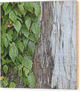 Weathered Tree Trunk With Vines Wood Print