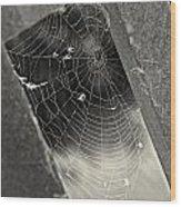 Web Wood Print