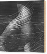 Web Of Legs Wood Print