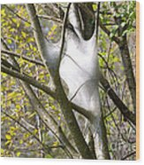 Webbed Branches Wood Print