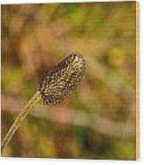 Weed Seed Head Wood Print