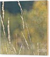 Weeds And Bokeh Wood Print