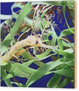 Weedy Sea Dragon Wood Print