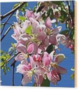 Weeping Cherry Tree Blossoms Wood Print