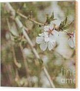 Weeping Cherry Tree Wood Print