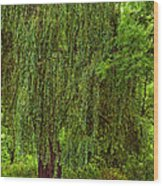 Weeping Willow Wood Print