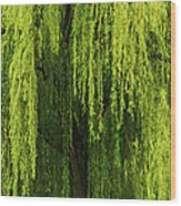 Weeping Willow Tree Enchantment  Wood Print