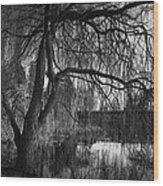 Weeping Willow Tree Wood Print