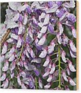 Weeping Wisteria - Spring Snow - Ice - Lavender - Flora Wood Print