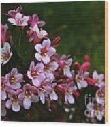 Weigela Branch Wood Print
