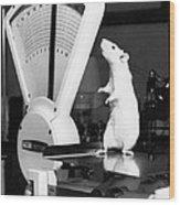 Weight Watcher Lab Rat Wood Print