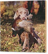 Weimaraner Hunting Dog Retrieving Ring Wood Print