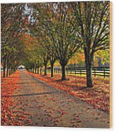 Welcome Home Bradford Pear Lined Drive-way Wood Print