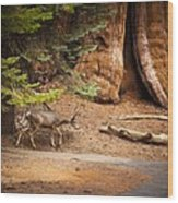 Welcome Home - Sequoia National Forest Wood Print