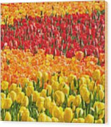 Welcome Spring Wood Print