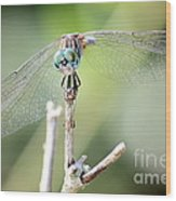 Welcome To My World Dragonfly Wood Print