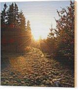 Welcoming Dawn Wood Print