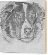 Welsh Border Collie Wood Print by Catherine Roberts