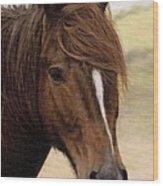 Welsh Pony Painting Wood Print