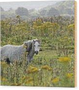 Welsh Pony Wood Print