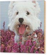 West Highland Terrier Dog In Heather Wood Print